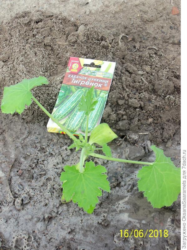 Первое растение