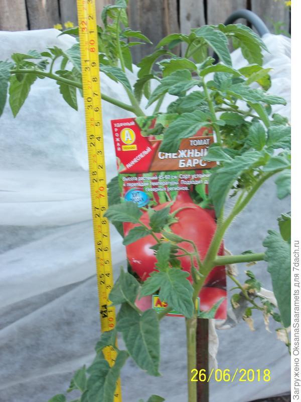 Третье растение, посев 22 марта