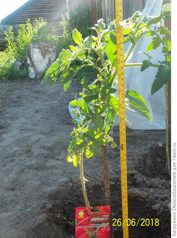 Первое растение, посев 22 марта