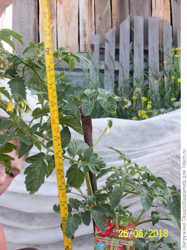 Четвёртое растение, посев 22 марта