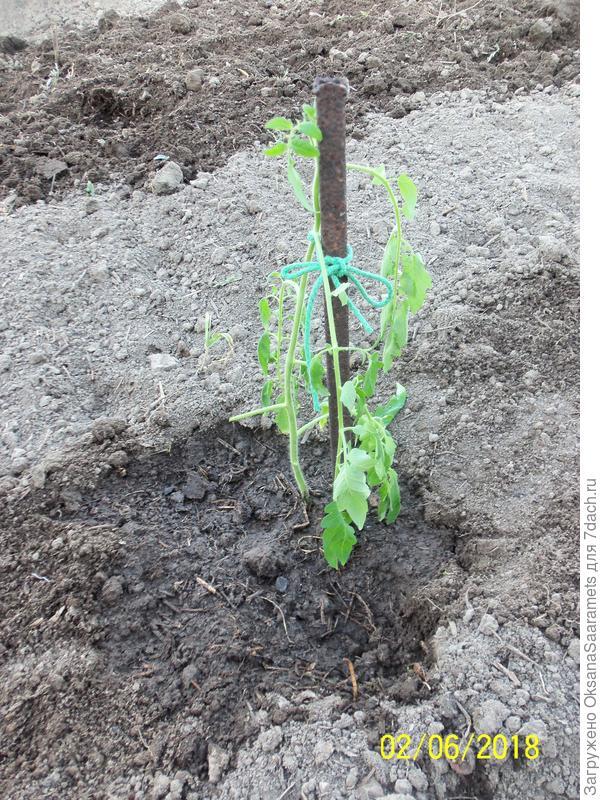 Четвёртое растение