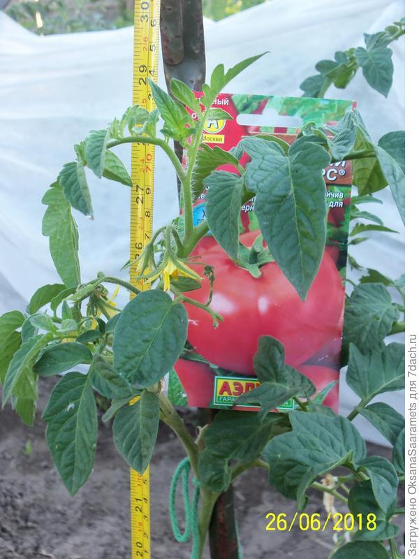 Первое растение, посев 29 марта
