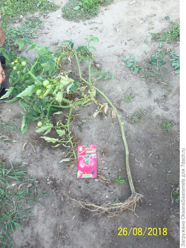 Третье растение