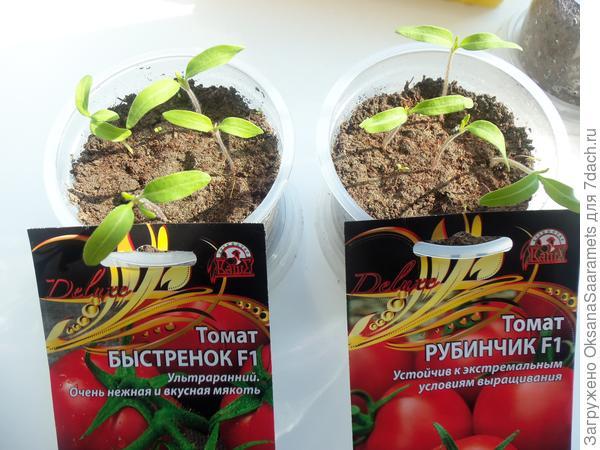 Подросшие томаты