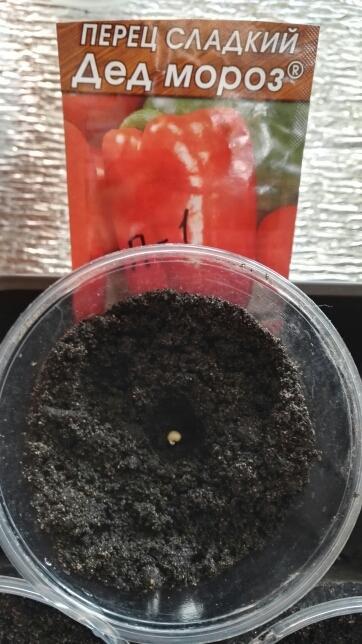 Семена в стаканчиках