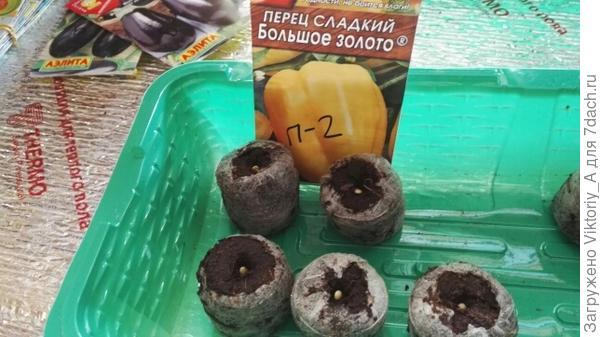 Таблетки с семенами