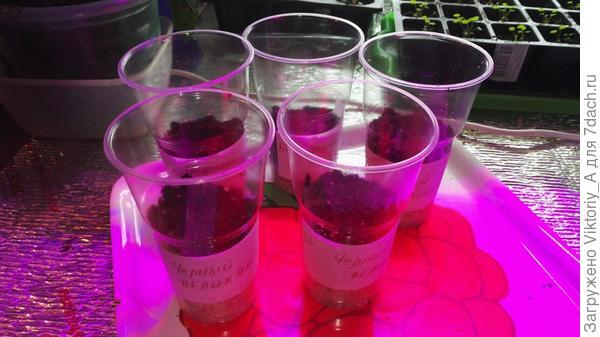 стаканчики