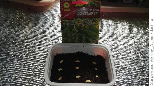 сухие семена в контейнере