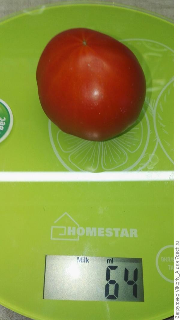 томат с 1-го куста
