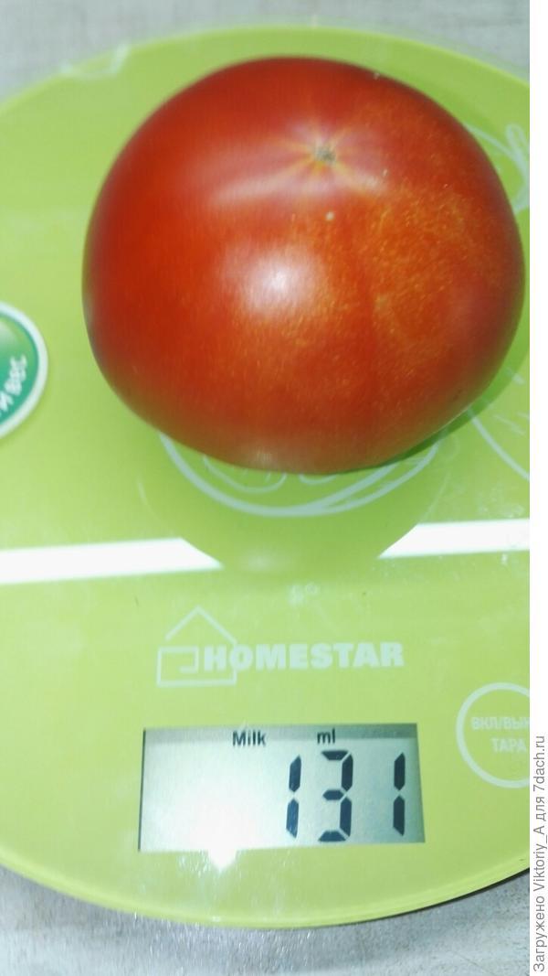 томат со второго куста