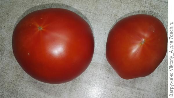 два помидорка