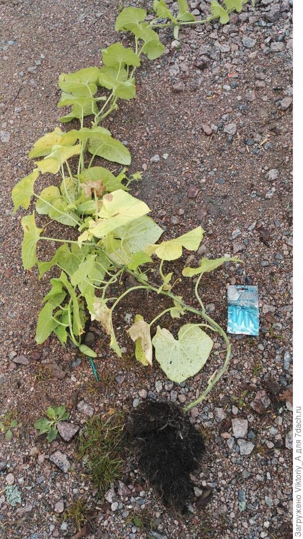 удаленные растения