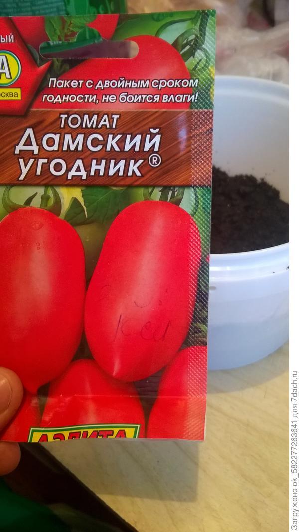 1 этап.Посев семян. Томат Дамский угодник 1.04.18