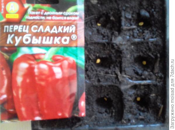 Раннеспелый сорт для открытого грунта и пленочных укрытий. 04.03.2018г посадка в кассеты по одному, всего 9 семян.  Семена высажены в грунт без замачивания, температура 23-25C.