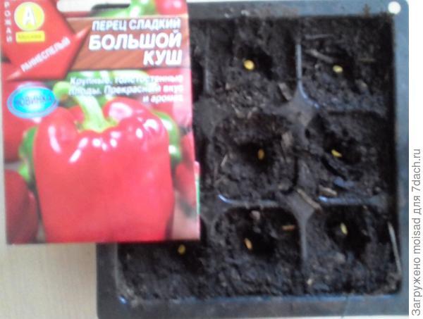 Крупноплодный раннеспелый сорт для открытого грунта и пленочных укрытий. 04.03.2018г посадка в кассеты по одному, всего 9 семян.  Семена высажены в грунт без замачивания, температура 23-25C.