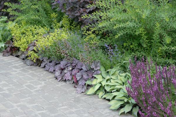 Растения переднего плана имеют высоту 20-40 см