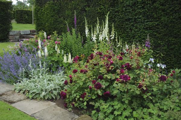 От выбранной стилистики зависит ассортимент растений в цветнике