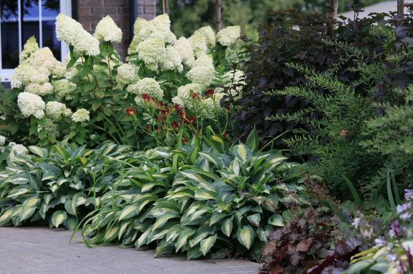 Многолетние растения, которые стабильны с весны до осени, составляют основную структуру цветника