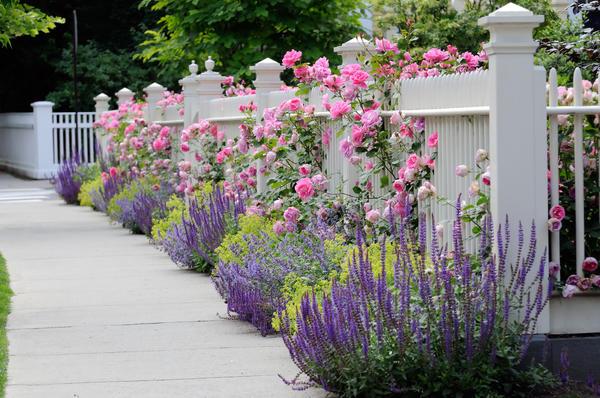В романтичном цветнике используйте растения в нежной цветовой гамме, простые по виду