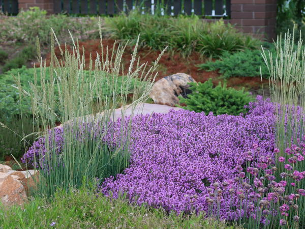 Почвопокровные виды помогают сделать более плавный переход от цветника к газону или дорожке
