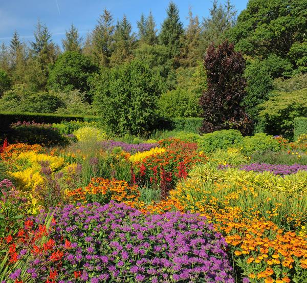 В правильном миксбордере постоянно что-то цветет, растения не сливаются в единую бесформенную массу