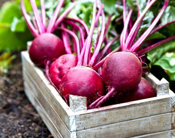 Вкусовые качества корнеплодов изменяются в зависимости от срока их хранения