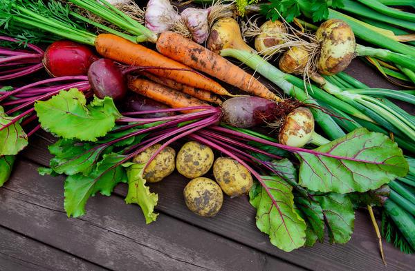 Хранение овощей по методу Галины Кизимы