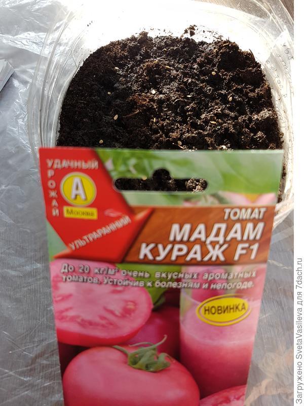 Посадка семян в размере 25шт в грунт
