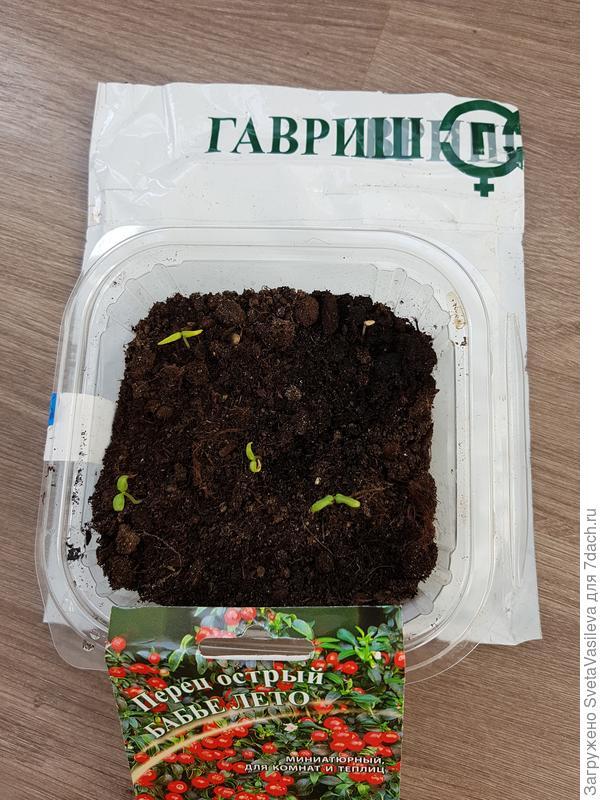 "Перец ""Бабье лето"" от 19.03"