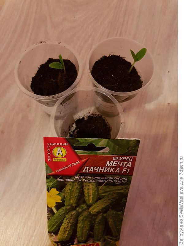 """Всхожесть семян""""Мечта дачника"""" 66%"""