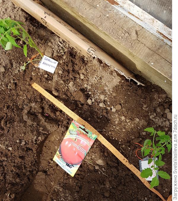 Растояние между томатами