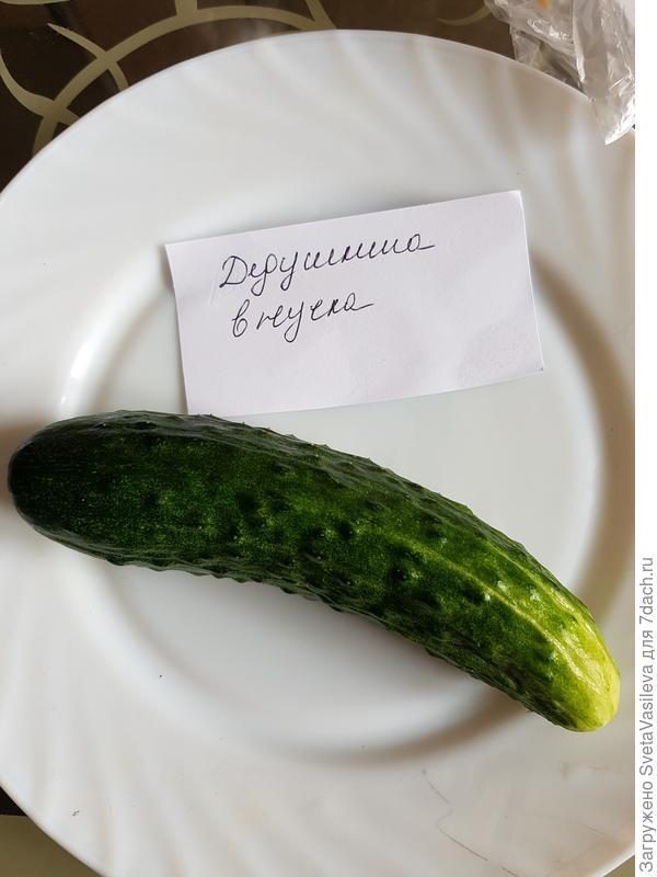 """""""Дедушкина внучка"""" общий вид"""