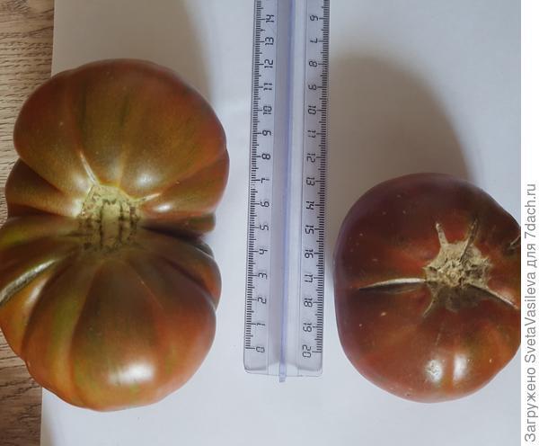Измеряем томат