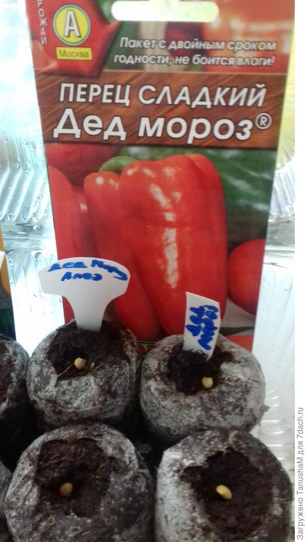 В торфотаблетки по сеяла два семени замоченныхорошо в листе алоэ и два семени в Энергене