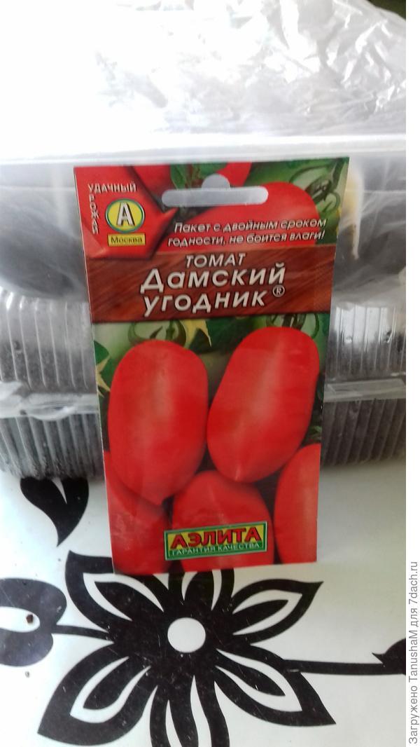 """Так томат """"Дамский угодник """"отправляется на проращивание"""