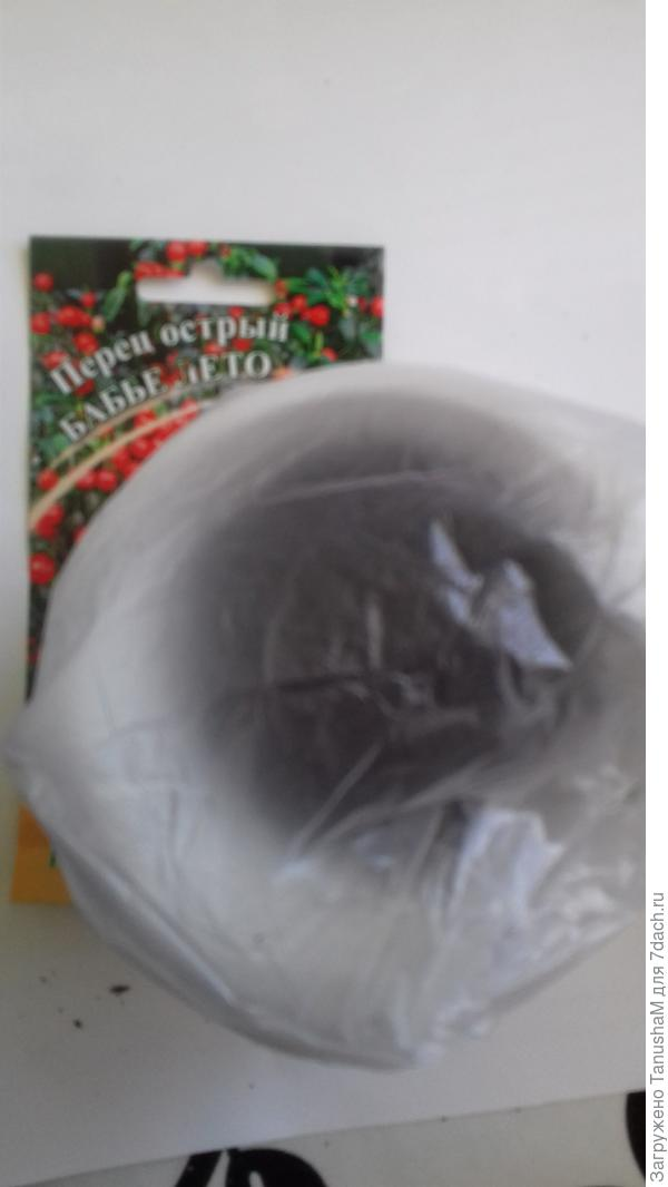 Стаканчик помещаю в полиэтиленовый пакет и ставлю в теплое место в близи батареи для проращивания. Температура 25-27°С.