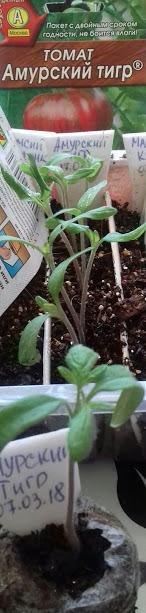 томаты на 20 марта