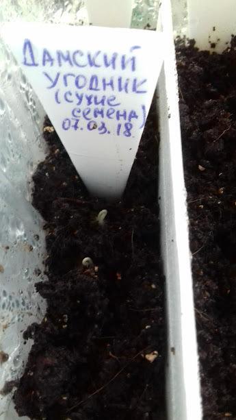 как ни странно ,но первыми начали всходить сухие семена