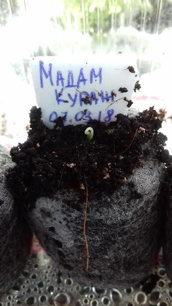 10 марта(3-ий день от посева)