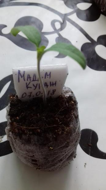15 марта 11-ый день от посева