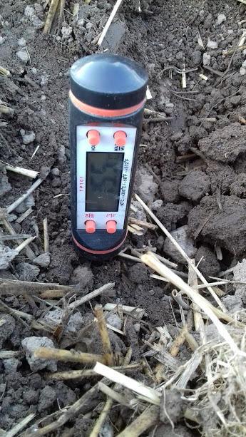 температура почвы на момент высадки