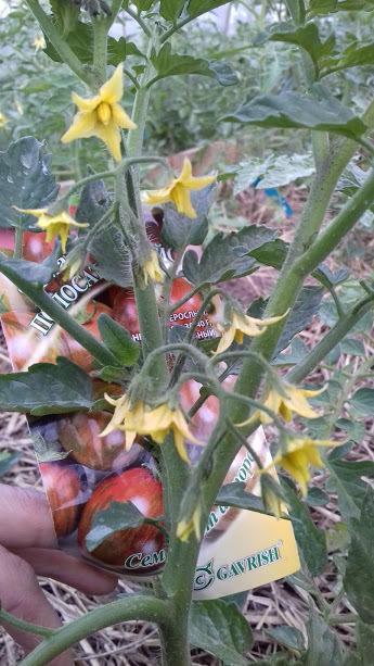 цветем и в открытом грунте