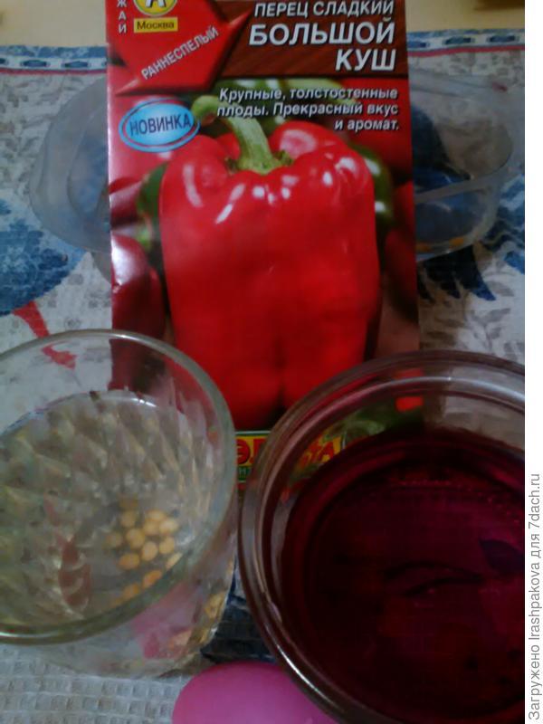 Произвела калибровку семян в солевом растворе. Затем полновесные семена обеззаразила в растворе марганца.