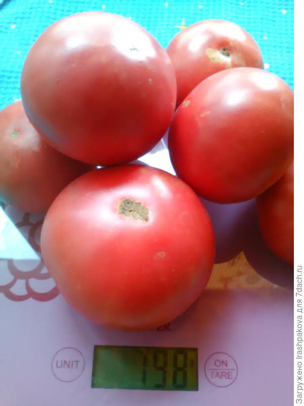Вес урожая