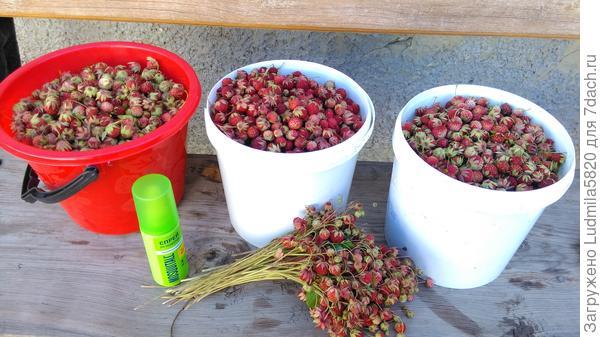 Сейчас будем готовить ягоды для варенья