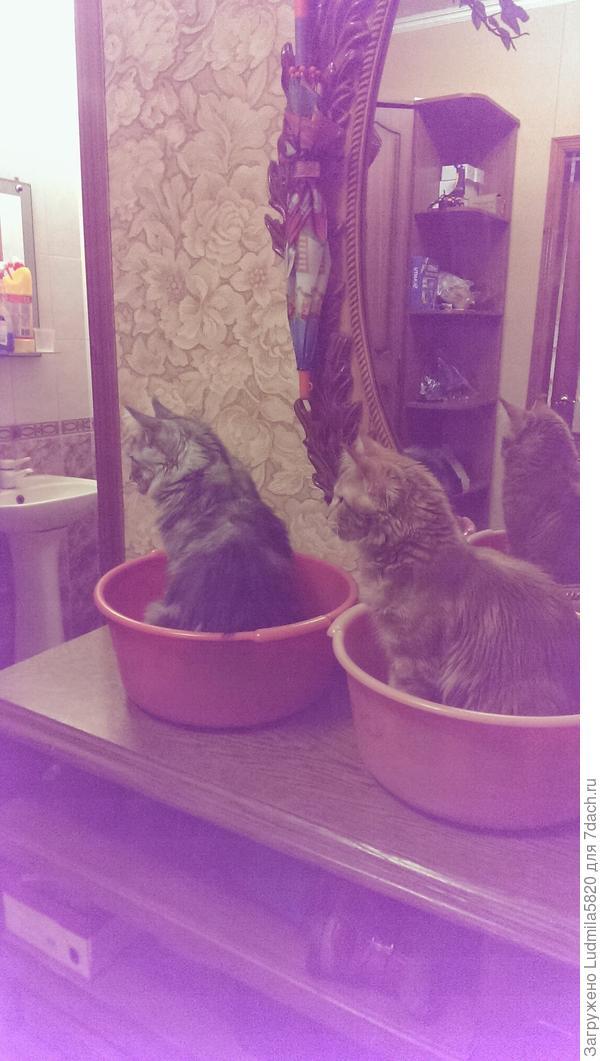 Коты приготовились к купанию в бане