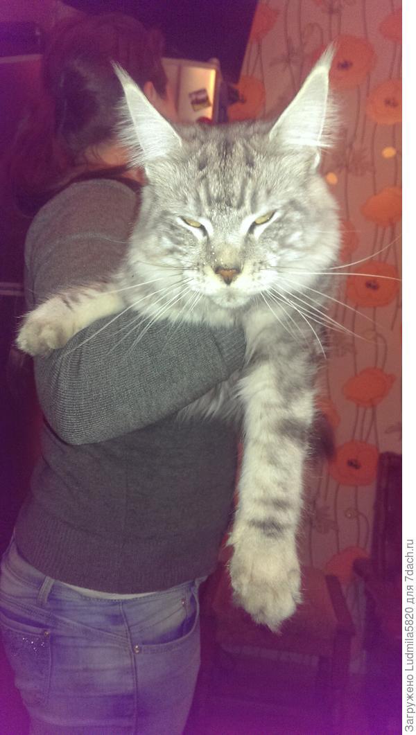 Очень нравится ему когда на руках так держат, но уж очень тяжелый