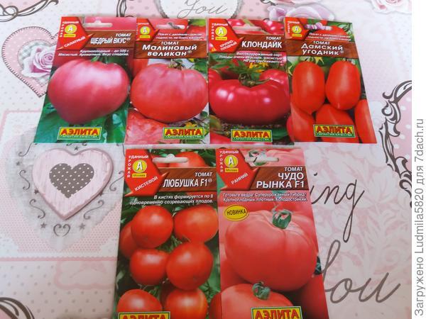 Четыре вида томатов сортовые и два гибрида.