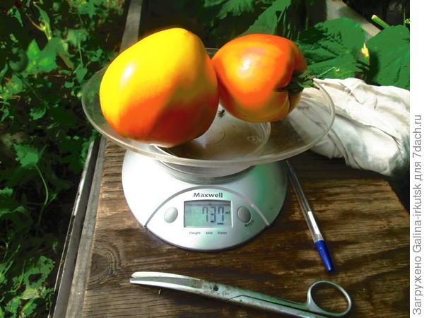 вес двух плодов, два красавца!