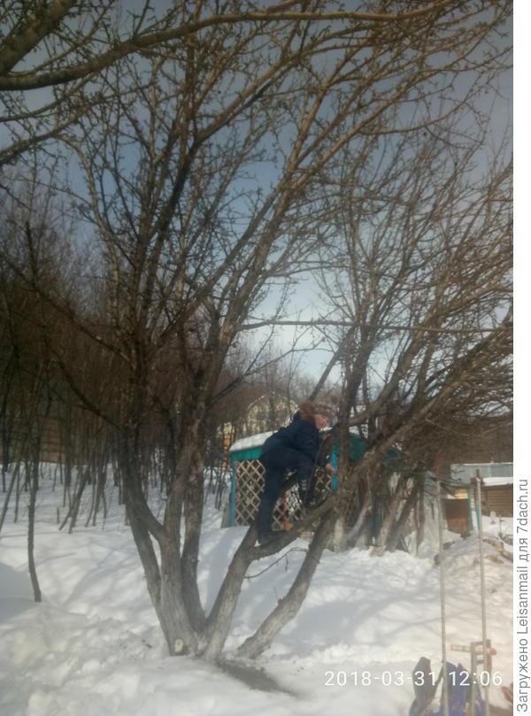 Пока мы с мужем делали перестановку в домике, сын залез на яблоню, за что и был награжден